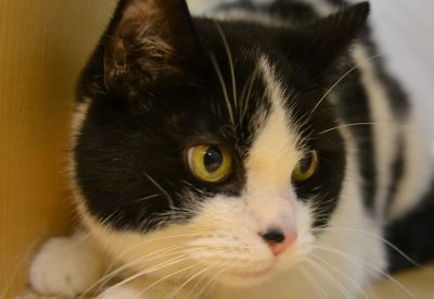 Good Golly - Miss Molly is the Pet of the Week