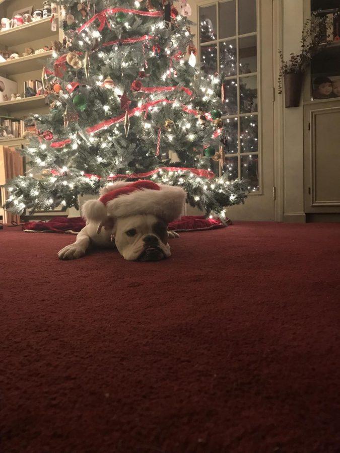 Christmas Joy...