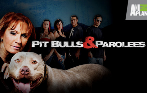 Pit Bulls & Parolees TV Review